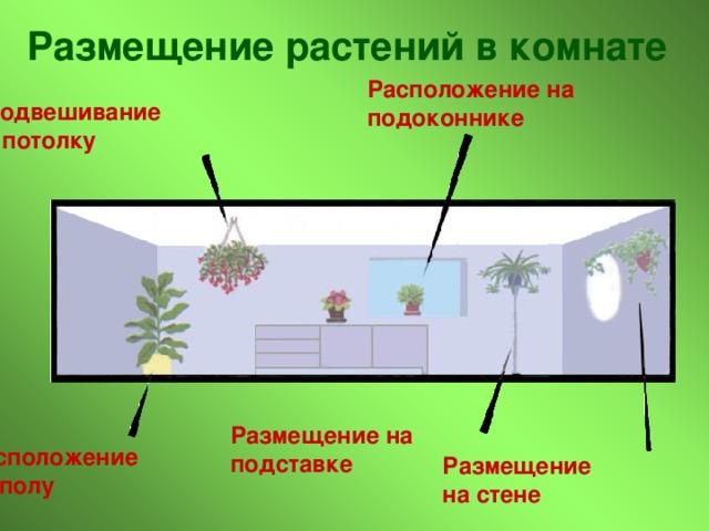 Размещение растений в комнате Расположение на подоконнике Подвешивание к потолку Размещение на подставке Расположение на полу Размещение на стене