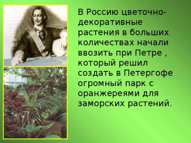 В Россию цветочно-декоративные растения в больших количествах начали ввозить при Петре , который решил создать в Петергофе огромный парк с оранжереями для заморских растений.