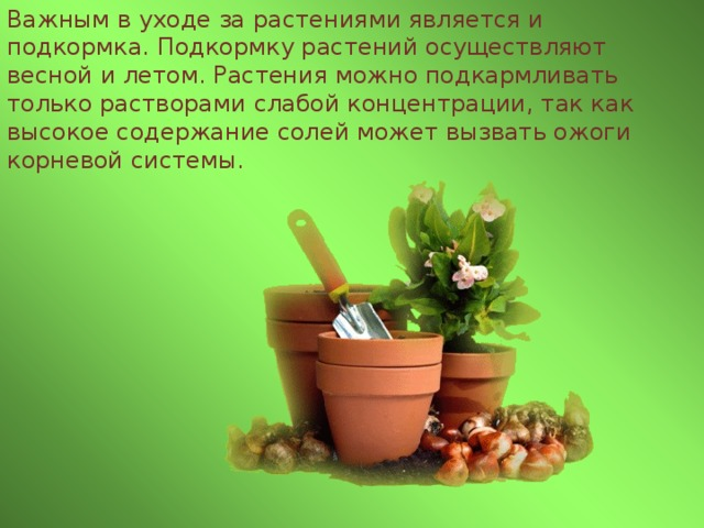 Важным в уходе за растениями является и подкормка. Подкормку растений осуществляют весной и летом. Растения можно подкармливать только растворами слабой концентрации, так как высокое содержание солей может вызвать ожоги корневой системы.
