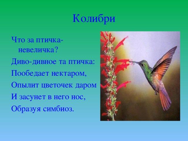 Колибри Что за птичка-невеличка? Диво-дивное та птичка: Пообедает нектаром, Опылит цветочек даром И засунет в него нос, Образуя симбиоз.