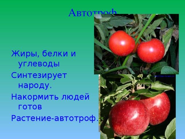 Автотроф Жиры, белки и углеводы Синтезирует народу. Накормить людей готов Растение-автотроф.