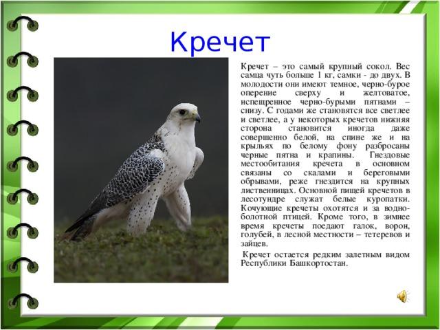услуги прачечной, кречет птица фото и описание наносить картинку