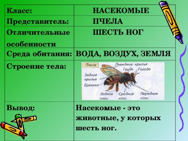 Класс:  НАСЕКОМЫЕ Представитель:  ПЧЕЛА Отличительные особенности  ШЕСТЬ НОГ  Среда обитания: ВОДА, ВОЗДУХ, ЗЕМЛЯ Строение тела:  Вывод:  Насекомые - это животные, у которых шесть ног.