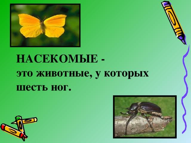 НАСЕКОМЫЕ -  это животные, у которых шесть ног.