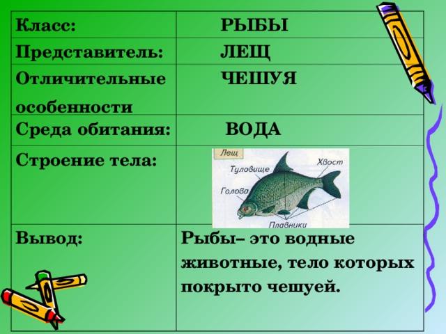 Класс:  РЫБЫ Представитель:  ЛЕЩ Отличительные особенности  ЧЕШУЯ Среда обитания:  ВОДА Строение тела:  Вывод:  Рыбы– это водные животные, тело которых покрыто чешуей.