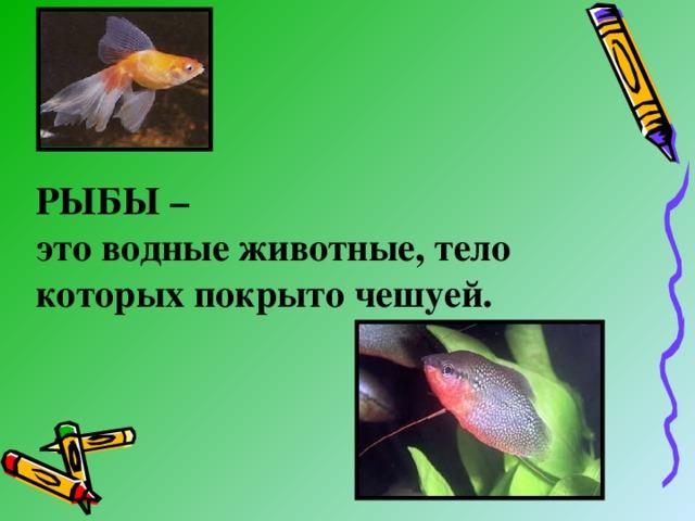 РЫБЫ –  это водные животные, тело которых покрыто чешуей.