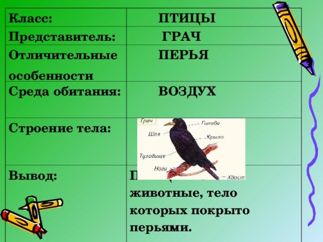 Класс:  ПТИЦЫ Представитель:  ГРАЧ Отличительные особенности  ПЕРЬЯ  Среда обитания:   ВОЗДУХ  Строение тела:  Вывод: ПТИЦЫ – это животные, тело которых покрыто перьями.