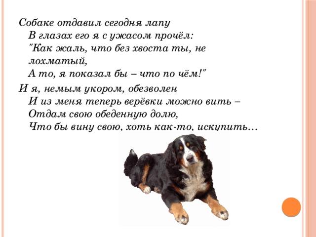 Собаке отдавил сегодня лапу  В глазах его я с ужасом прочёл: