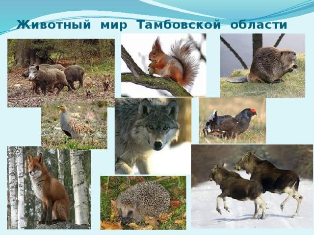 Животный мир Тамбовской области