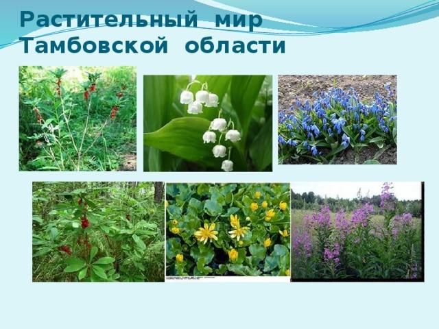 Растительный мир Тамбовской области