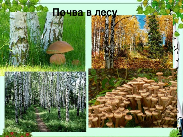 Почва в лесу