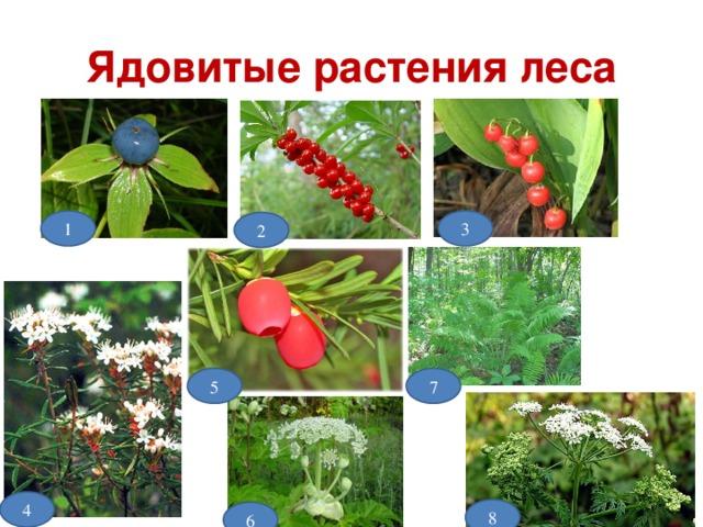 Ядовитые растения леса 3 1 2 5 7 4 8 6