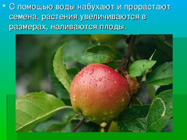 С помощью воды набухают и прорастают семена, растения увеличиваются в размерах, наливаются плоды.