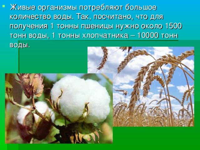 Живые организмы потребляют большое количество воды. Так, посчитано, что для получения 1 тонны пшеницы нужно около 1500 тонн воды, 1 тонны хлопчатника – 10000 тонн воды.