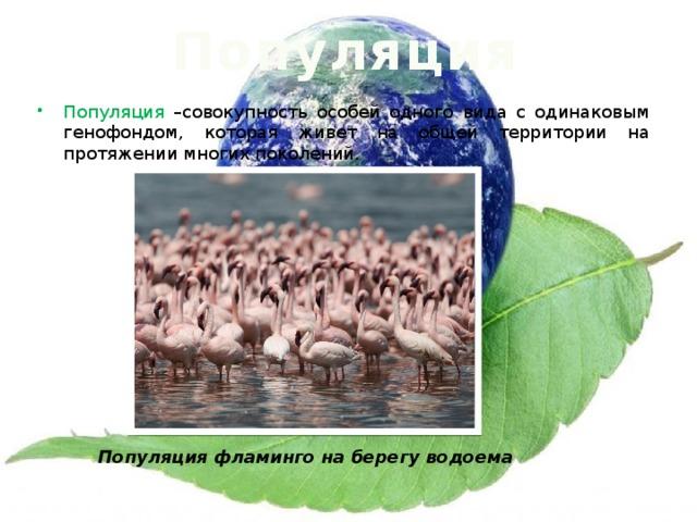 Популяция Популяция –совокупность особей одного вида с одинаковым генофондом, которая живет на общей территории на протяжении многих поколений. Популяция фламинго на берегу водоема
