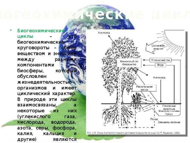 Биогеохимические циклы