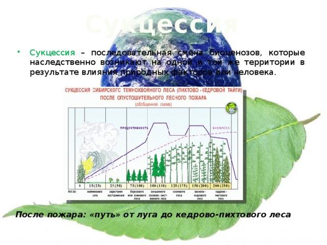 Сукцессия Сукцессия – последовательная смена биоценозов, которые наследственно возникают на одной и той же территории в результате влияния природных факторов или человека. После пожара: «путь» от луга до кедрово-пихтового леса