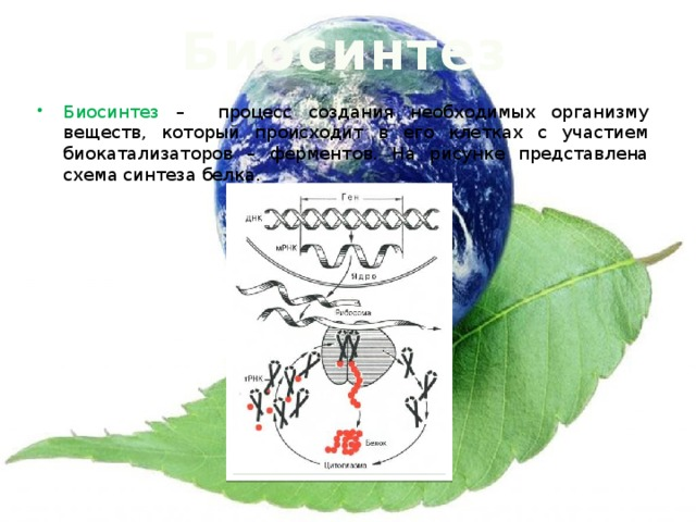 Биосинтез