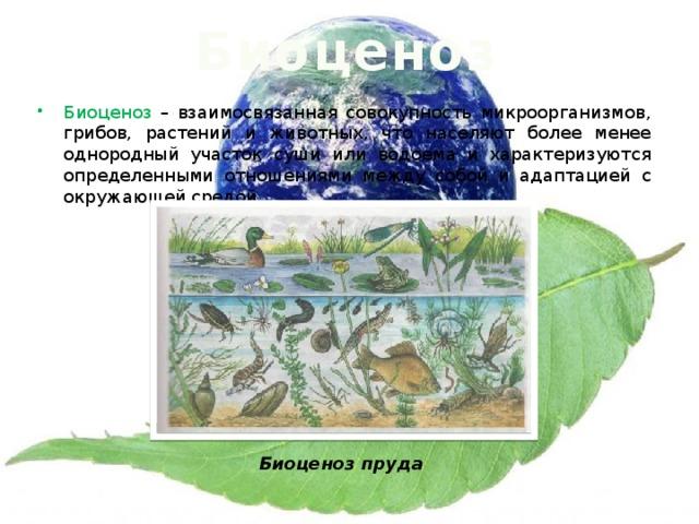 Биоценоз Биоценоз – взаимосвязанная совокупность микроорганизмов, грибов, растений и животных, что населяют более менее однородный участок суши или водоема и характеризуются определенными отношениями между собой и адаптацией с окружающей средой. Биоценоз пруда