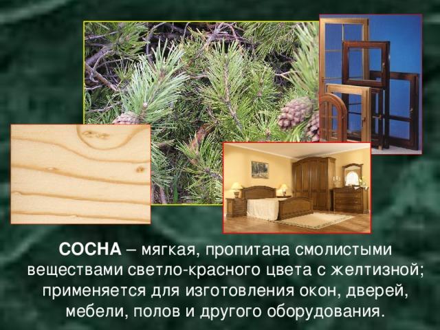 СОСНА – мягкая, пропитана смолистыми веществами светло-красного цвета с желтизной; применяется для изготовления окон, дверей, мебели, полов и другого оборудования.