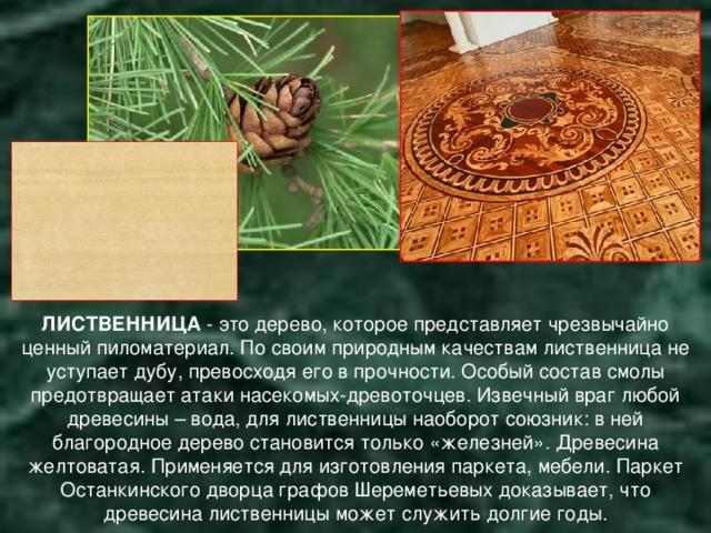 ЛИСТВЕННИЦА - это дерево, которое представляет чрезвычайно ценный пиломатериал. По своим природным качествам лиственница не уступает дубу, превосходя его в прочности. Особый состав смолы предотвращает атаки насекомых-древоточцев. Извечный враг любой древесины – вода, для лиственницы наоборот союзник: в ней благородное дерево становится только «железней». Древесина желтоватая. Применяется для изготовления паркета, мебели.  Паркет Останкинского дворца графов Шереметьевых доказывает, что древесина лиственницы может служить долгие годы.