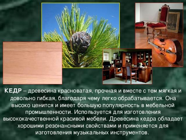 КЕДР – древесина красноватая, прочная и вместе с тем мягкая и довольно гибкая, благодаря чему легко обрабатывается.  Она высоко ценится и имеет большую популярность в мебельной промышленности. Используется для изготовления высококачественной красивой мебели. Древесина кедра обладает хорошими резонансными свойствами и применяется для изготовления музыкальных инструментов.