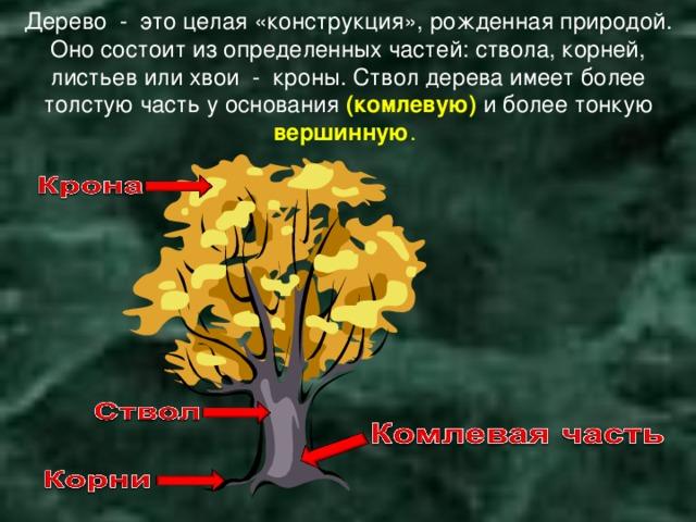 Дерево - это целая «конструкция», рожденная природой. Оно состоит из определенных частей: ствола, корней, листьев или хвои - кроны. Ствол дерева имеет более толстую часть у основания  ( комлевую) и более тонкую вершинную .