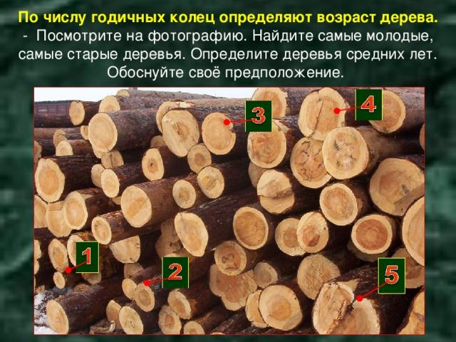 По числу годичных колец определяют возраст дерева.  - Посмотрите на фотографию. Найдите самые молодые, самые старые деревья. Определите деревья средних лет. Обоснуйте своё предположение.