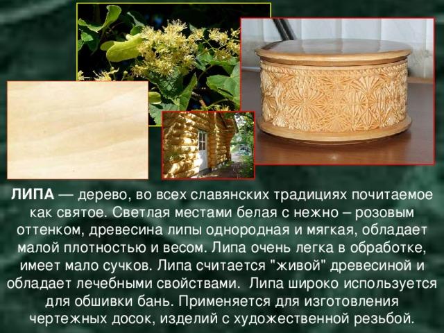 ЛИПА — дерево, во всех славянских традициях почитаемое как святое.  Светлая местами белая с нежно – розовым оттенком, древесина липы однородная и мягкая, обладает малой плотностью и весом. Липа очень легка в обработке, имеет мало сучков.  Липа считается