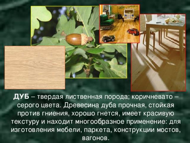 ДУБ – твердая лиственная порода; коричневато – серого цвета. Древесина дуба прочная, стойкая против гниения, хорошо гнется, имеет красивую текстуру и находит многообразное применение: для изготовления мебели, паркета, конструкции мостов, вагонов.
