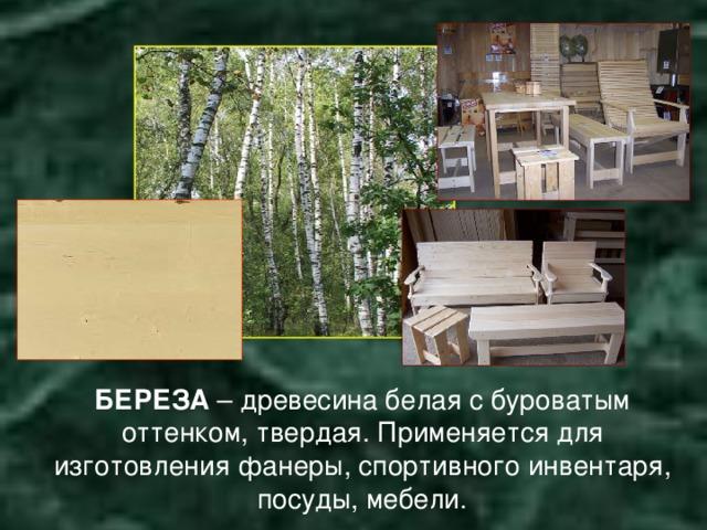 БЕРЕЗА – древесина белая с буроватым оттенком, твердая. Применяется для изготовления фанеры, спортивного инвентаря, посуды, мебели.