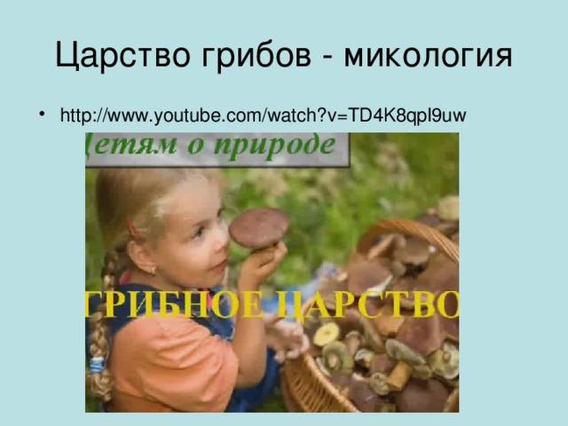 Царство грибов - микология