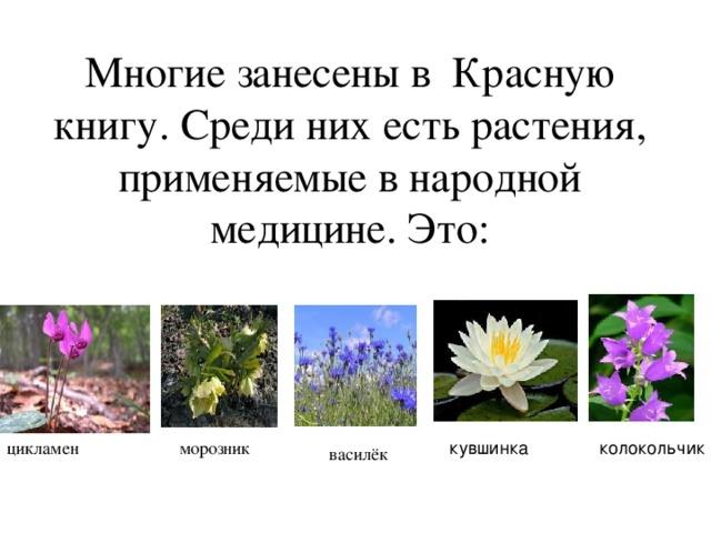Многие занесены в Красную книгу. Среди них есть растения, применяемые в народной медицине. Это: цикламен морозник кув кувшинка шинка к колокольчик олокольчик василёк
