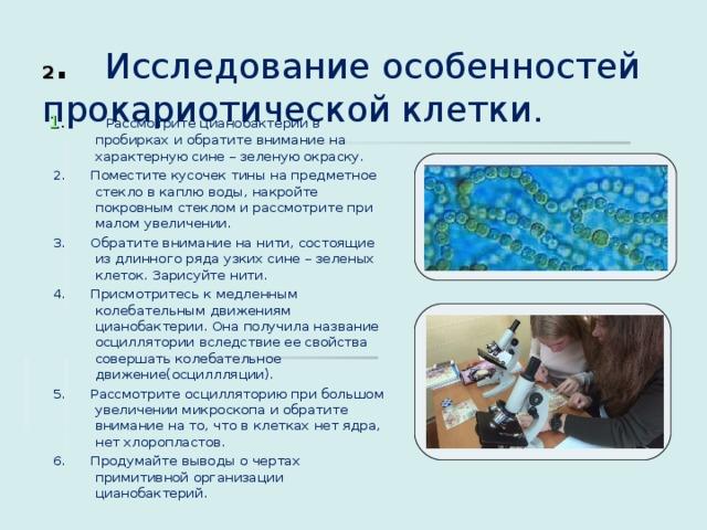 2 . Исследование особенностей прокариотической клетки. 1 . Рассмотрите цианобактерии в пробирках и обратите внимание на характерную сине – зеленую окраску.  2. Поместите кусочек тины на предметное стекло в каплю воды, накройте покровным стеклом и рассмотрите при малом увеличении.  3. Обратите внимание на нити, состоящие из длинного ряда узких сине – зеленых клеток. Зарисуйте нити.  4. Присмотритесь к медленным колебательным движениям цианобактерии. Она получила название осциллятории вследствие ее свойства совершать колебательное движение(осциллляции).  5. Рассмотрите осцилляторию при большом увеличении микроскопа и обратите внимание на то, что в клетках нет ядра, нет хлоропластов.  6. Продумайте выводы о чертах примитивной организации цианобактерий.