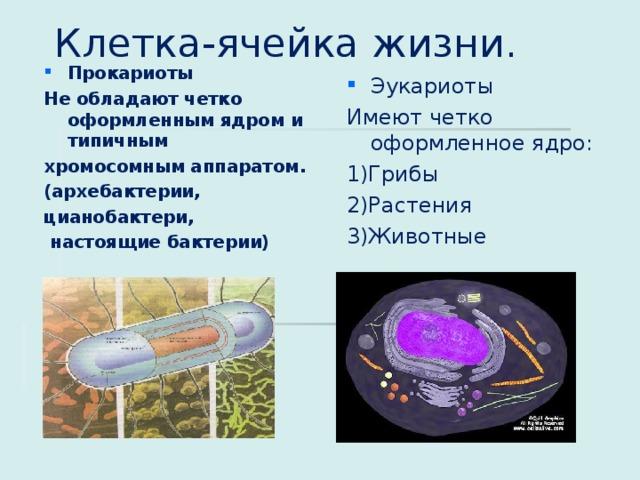 Клетка-ячейка жизни . Прокариоты Не обладают четко оформленным ядром и типичным хромосомным аппаратом . ( архебактерии , цианобактери,  настоящие бактерии) Эукариоты Имеют четко оформленное ядро : 1) Грибы 2)Растения 3)Животные