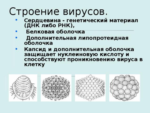 Строение вирусов.