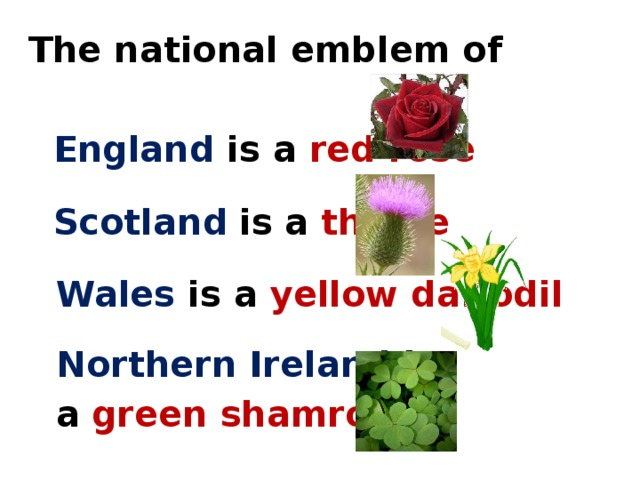 The national emblem of  England  is a red rose  Scotland  is a thistle  Wales  is a yellow daffodil  Northern Ireland is  a  green shamrock
