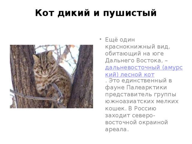 Кот дикий и пушистый