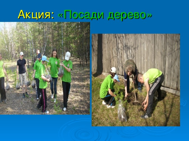 Акция:  «Посади дерево»