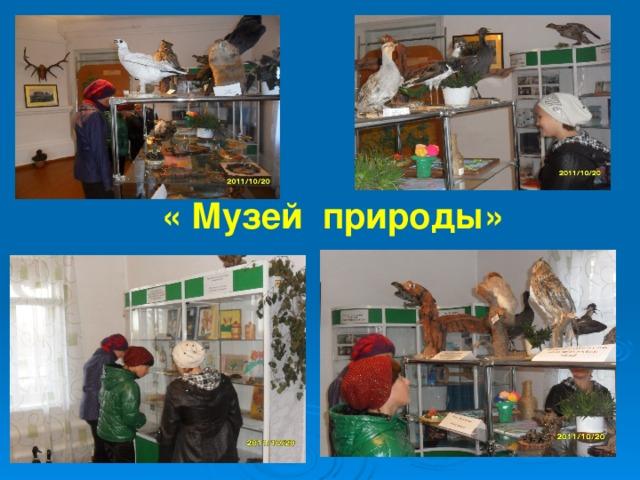 « Музей природы»
