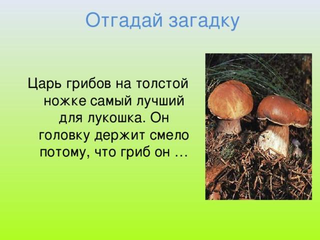 грибы загадки с картинками и ответами далеко все