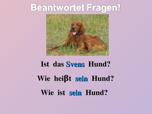 Ist das Svens Hund? Wie hei β t sein Hund? Wie ist sein Hund?