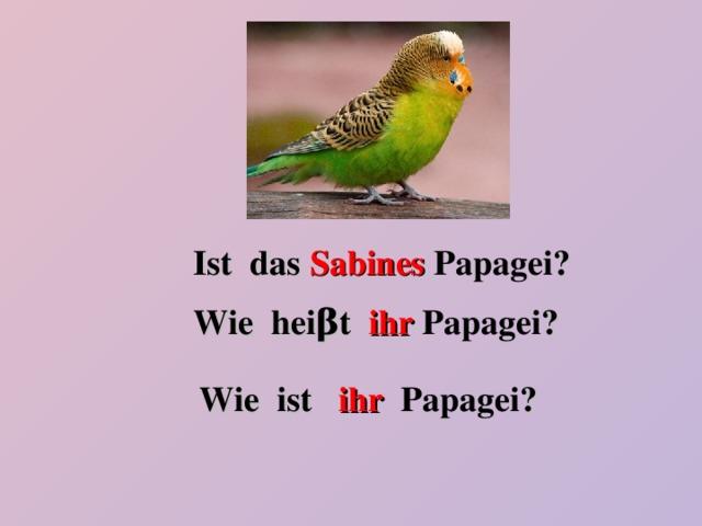 Ist das Sabines  Papagei ? Wie hei β t ihr  Papagei ? Wie ist ihr  Papagei ?