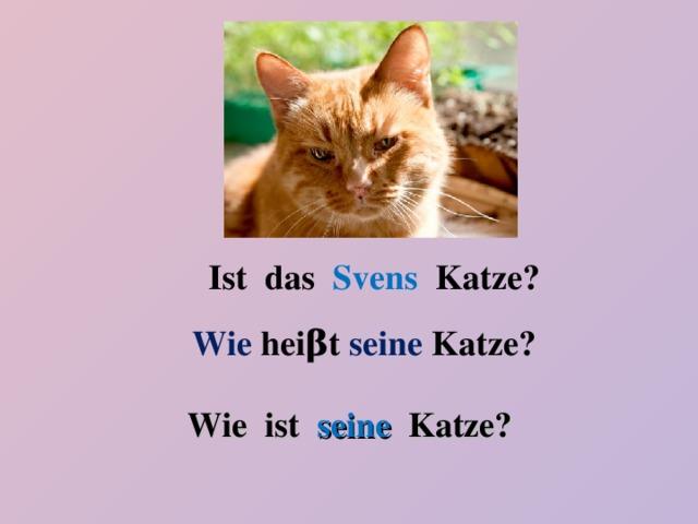 Ist das Svens Katze? Wie hei β t seine Katze? Wie ist seine Katze?