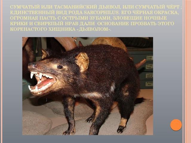 Сумчатый или тасманийский дьявол, или сумчатый чёрт ; единственный вид рода Sarcophilus. Его чёрная окраска, огромная пасть с острыми зубами, зловещие ночные крики и свирепый нрав дали основание прозвать этого коренастого хищника «дьяволом».