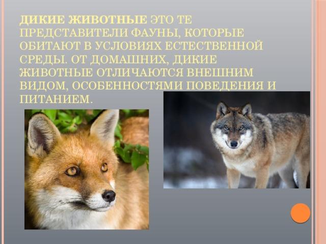 Дикие животные это те представители фауны, которые обитают в условиях естественной среды. От домашних, дикие животные отличаются внешним видом, особенностями поведения и питанием.