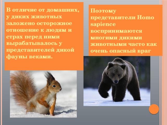 В отличие от домашних, у диких животных заложено осторожное отношение к людям и страх перед ними вырабатывалось у представителей дикой фауны веками.  Поэтому представители Homo sapience воспринимаются многими дикими животными часто как очень опасный враг