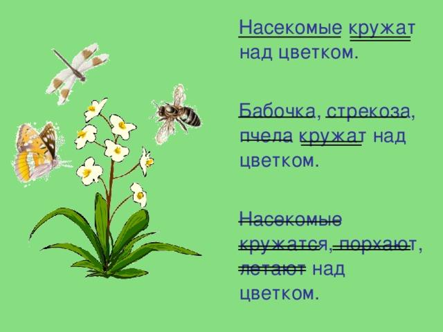 Насекомые кружат над цветком.  Бабочка, стрекоза, пчела кружат над цветком.  Насекомые кружатся, порхают, летают над цветком.