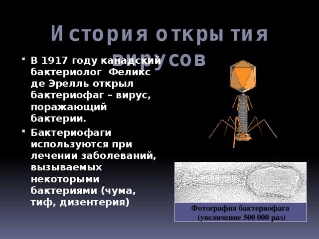 История открытия вирусов В 1917 году канадский бактериолог Феликс де Эрелль открыл бактериофаг – вирус, поражающий бактерии. Бактериофаги используются при лечении заболеваний, вызываемых некоторыми бактериями (чума, тиф, дизентерия)  Фотография бактериофага  (увеличение 500 000 раз)