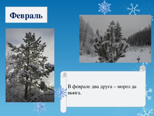 Февраль В феврале два друга – мороз да вьюга.